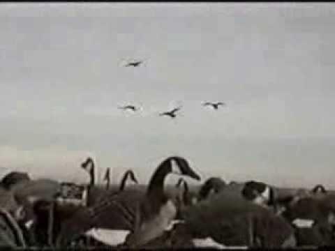 Goosehunt.ru - отстрел гусей