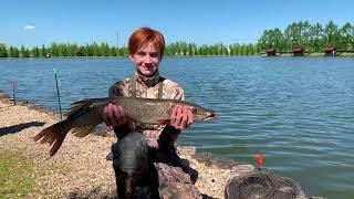 Форум золотой сазан рыбалка
