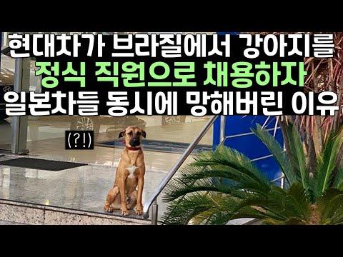 현대차가 브라질에서 강아지를 정식 직원으로 채용하자 일본차들 동시에 망해버린 이유
