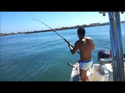 Pesca di terrarium di una cosa