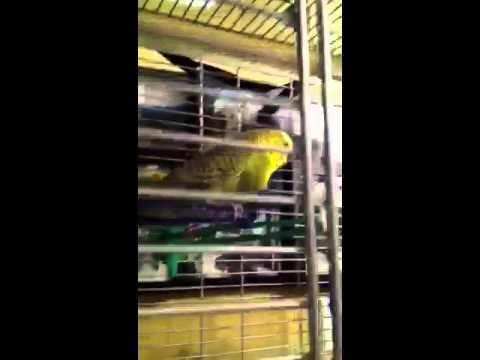 comment soigner perroquet enrhumé