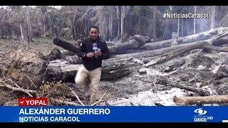 DAÑO AMBIENTAL POR DEFORESTACIÓN EN CASANARE
