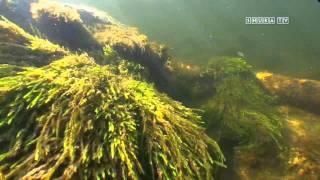 Подводная охота на Кольском. Часть 2