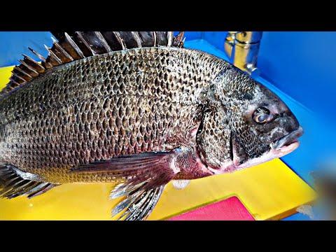 활어티비 _ Fish trim