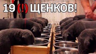Собака родила 19 щенков в Воронеже и почти побила рекорд
