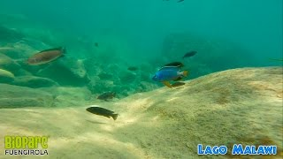 Snorkel En El Lago Malawi 5