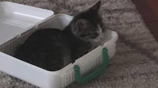 8 week-old Kitten Care