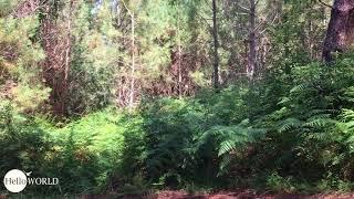 Ein bisschen Schwarzwald an der Costa da Morte