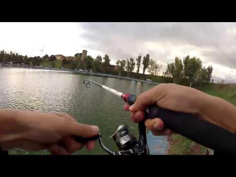 La pesca su un video di Astrakan di pesce gatto