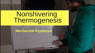 Non-shivering Thermogenesis Explained