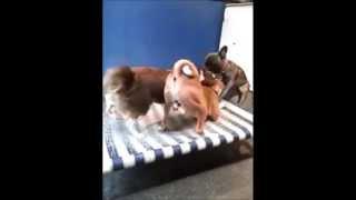 Dog daycare   dog wash day care & boarding NYC