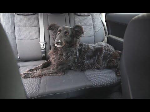 Hundegurt fürs Auto