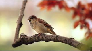 1 Hour Birdsong Sounds on a Spring Morning in English Countryside