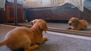 Cats vs Dogs funny videos Which Is the Best Pet for Me