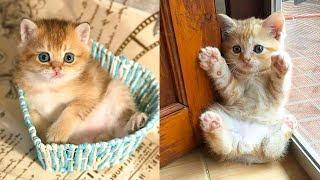Baby Cats - Cute and Funny Cat Videos Compilation #28   Aww Animals