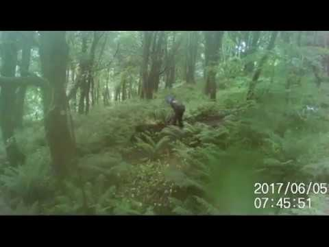 Trail Saboteur caught on camera