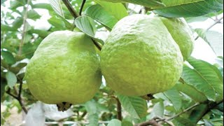 Best Fruits for Diabetes Patients