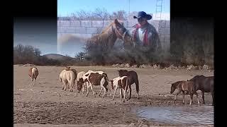 La Yegua Colorada-antonio Aguilar