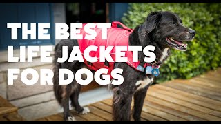 The Best Life Jackets For Dogs   Rover.com