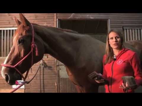 Le film le stimulant de cheval
