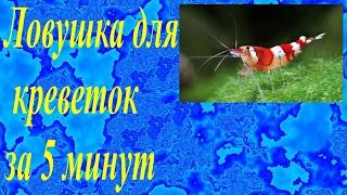 Как правильно ловить креветку на ловушки