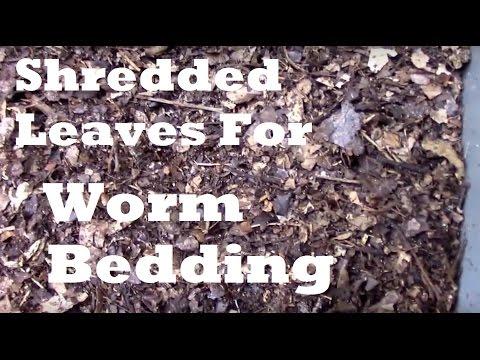 Kuting laban sa mga worm sa kung ano ang edad