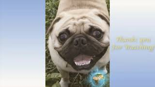 Cute Pets And Funny Animals Compilation #2