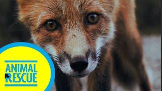 Animal Rescue - Season 2, Episode 8