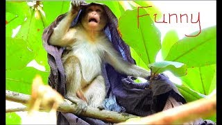 Video Monkey On The Tree   Best Clip Video Funny Of Kari