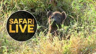 safariLIVE - Sunrise Safari - August 22, 2018