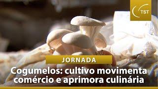 Plantação de cogumelos estimula comércio do DF e incrementa culinária