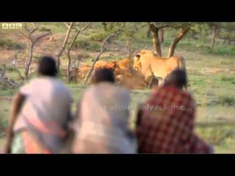 Ngang nhiên cướp mồi của đàn sư tử