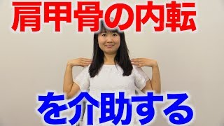 胸郭を広げる肩甲骨の内転