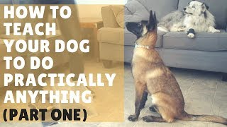 Dog Training 101 - Ep. 1: How to Get Started with Training