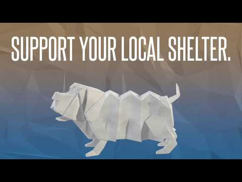 Video: WCJC Animal Shelter, August 17
