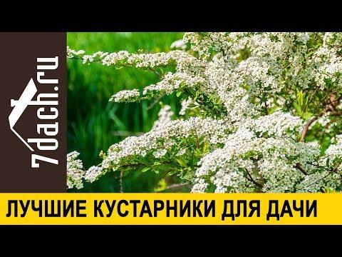 🌿 Лучшие декоративные кустарники для дачи - 7 дач