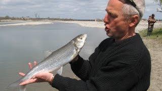 Чемпионат по рыбы ловля в дагестане