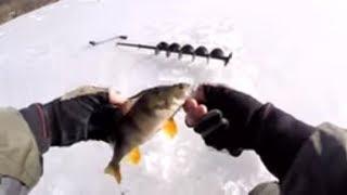 РЫБАЛКА НА ПРОТОКЕ Зимняя рыбалка 2018 Ловля окуня на безмотылку
