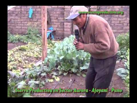 Sierra Productiva en Predio de Adrian Chua Luna   Sector Aurora   Ajoyani   Puno
