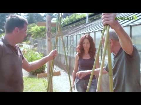 Come costruire un supporto per fagiolini rampicanti - Bonduelle TV - A spasso nell'orto