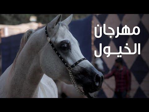 منافسة بين 100 حصان على لقب أجمل الخيول العربية