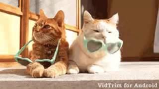 Gambar cover Cat Gangnam Style   funny animal videos 0222