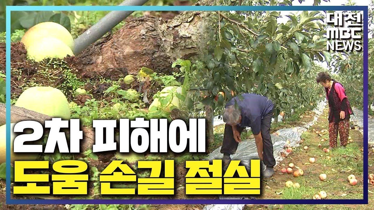 [리포트]농작물 2차 피해..도움 손길 절실