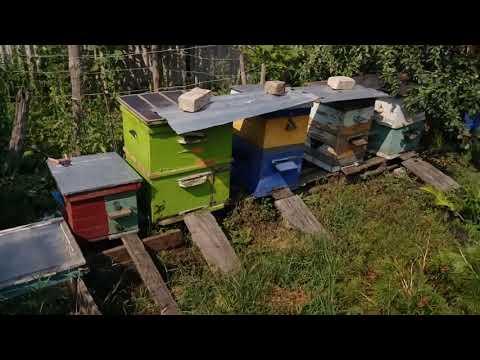 Сельская усадьба и пчелки 3 года назад 22/07/2017.