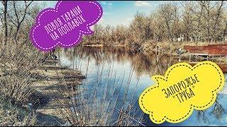 Где ловить тарань в запорожье весной
