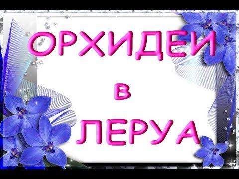 """ЛЕРУА:""""свежий завоз"""" ОРХИДЕЙ;приветы Елене,Егорушке,Ирине и Галине!"""