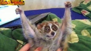 Смешная видеопдборка шуток и приколов в России! Нелепые моменты!Забавные животные!