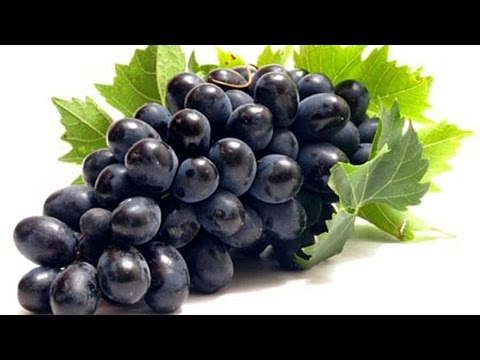 Video khasiat buah anggur hitam untuk menjaga kesehatan tubuh