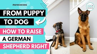 How to raise a German Shepherd 🐕🦺 puppy. Health, Nutrition & Training Complete Guide.