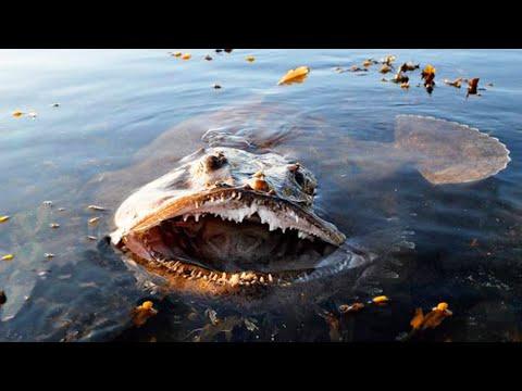 Der Lachs und die Würmer
